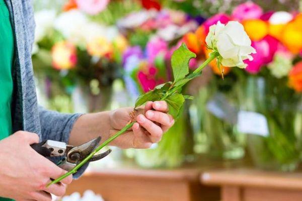 Как сохранить розы до следующего дня