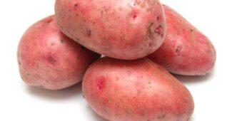 фото картофеля розара