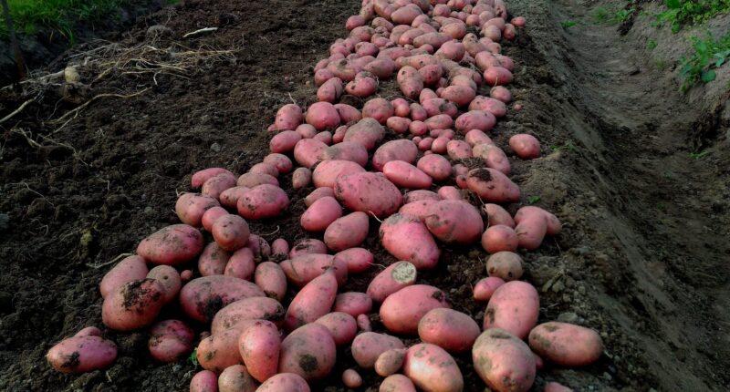 Photos harvest